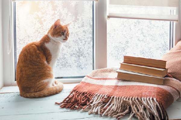 A cat looking out a window near books, a blanket, etc.