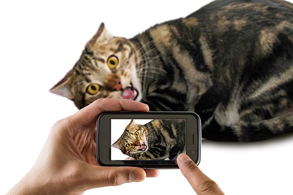 A cat recorded on a smartphone.