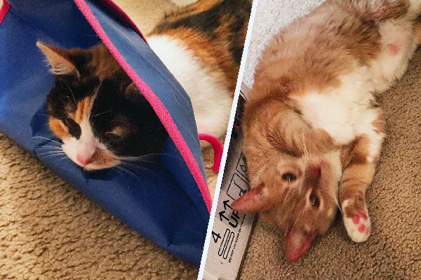 Cats after anesthesia.