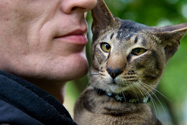 A man holding a cat close to his face.