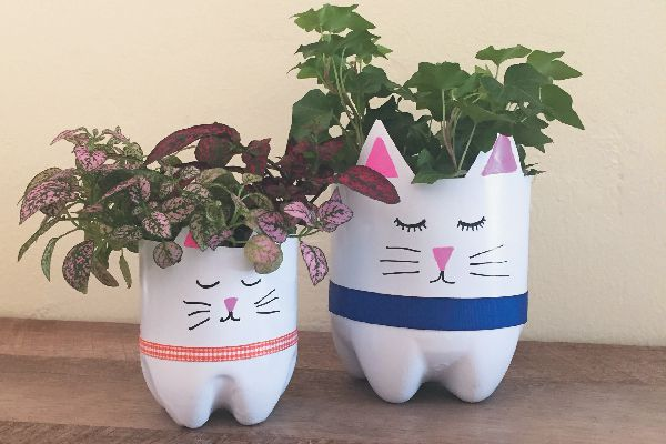 Recycled bottle cat planter.