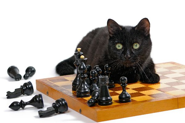 A cat knocking chess pieces over.