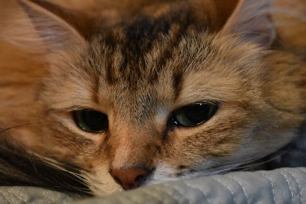 A cat with teary, watery eyes.