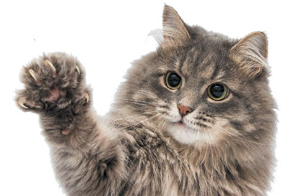 An excited cat with his claws out.