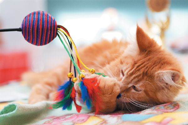 An orange tabby cat playing with a toy.