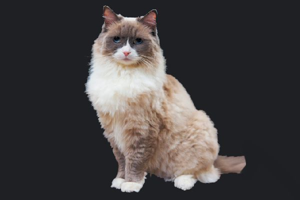 Matilda retired in 2017, after seven years as the Algonquin cat.