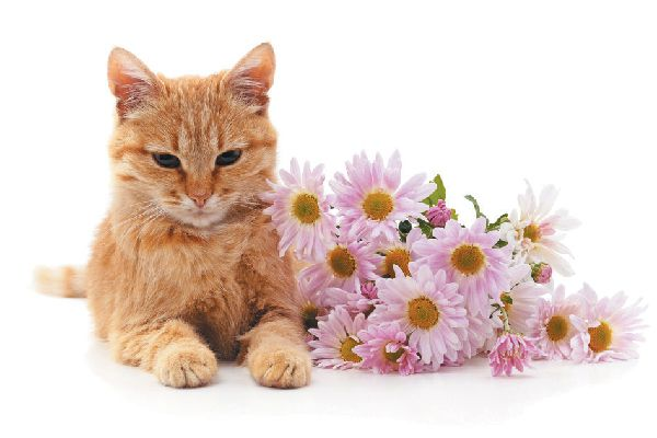 An orange cat with flowers or herbs.