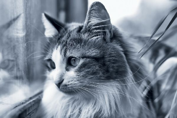 A sad cat looking out of a window.