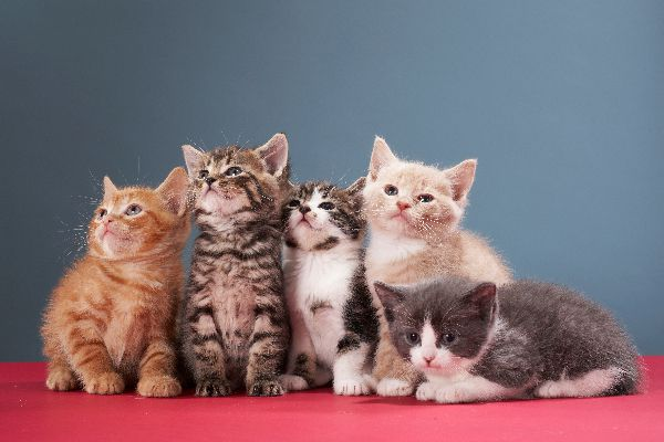 A group or litter of kittens.