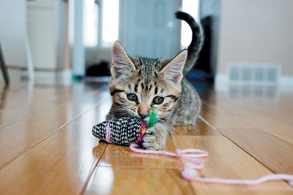 Kitten playing with a toy mouse on the floor.