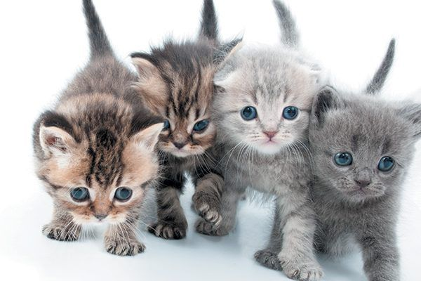 Four kittens standing together with big blue eyes.