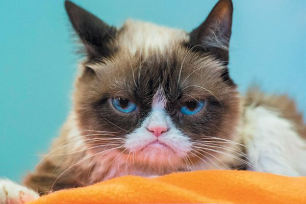 Grumpy Cat receives $710,000 in settlement. Photography by ©Credit   Getty Images.