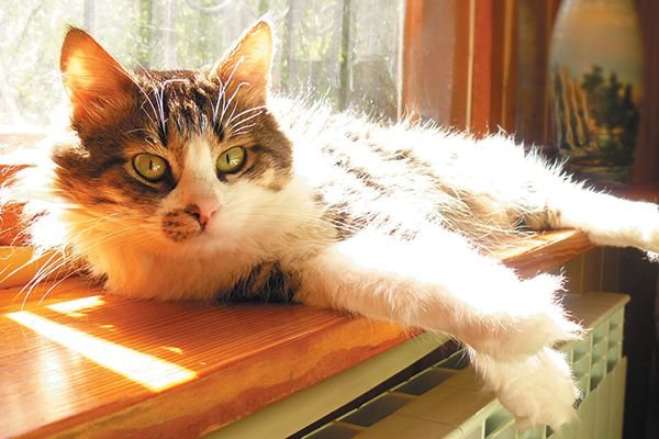 """You took steps to """"kitten-proof"""" your home, and now it is time to to revisit some of these areas as your cat enters her senior years. Photography by ©MaraniVideo
