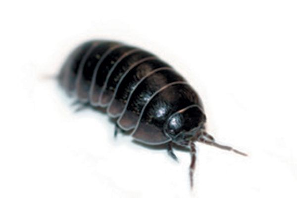 Stella does not like the look of the potato bug under the bed. Photography ©slyudmila   Getty Images.