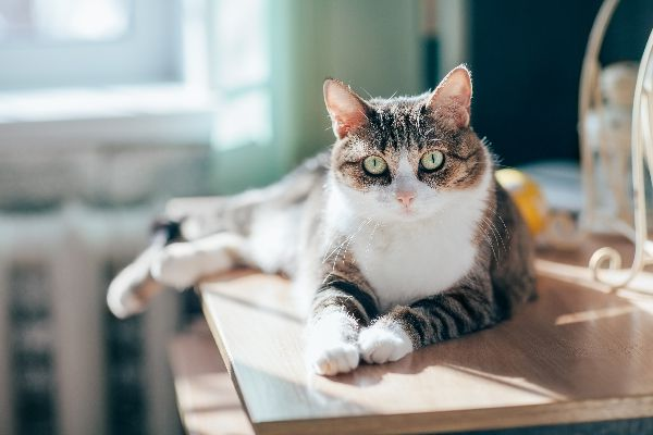 A cat sitting in the sunshine on a table.