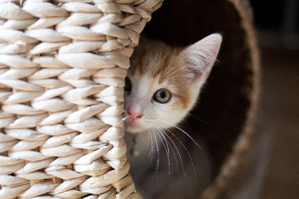 What causes stress in cats and what are the signs of stress in cats?