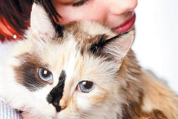Often the behavior's that adoptive parents are looking for are found in older cats. Photography ©jonya   Getty Images.