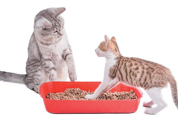 Just because a natural cat litter claims to be flushable doesn't mean it should be. Photography ©Assja   Getty Images.
