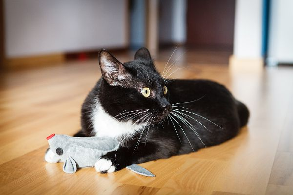 A black and white cat with his whiskers out.