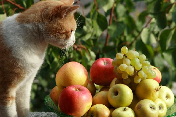 A cat with apples and grapes.