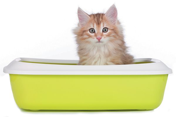Find out exactly how to litter train a kitten here. Photography ©absolutimages   Getty Images.