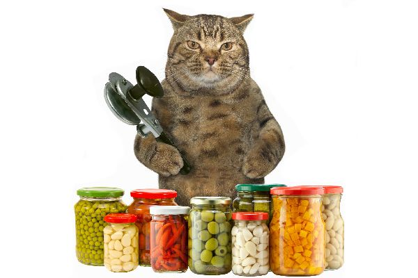 Cat with garlic and other spices can opener in hand.