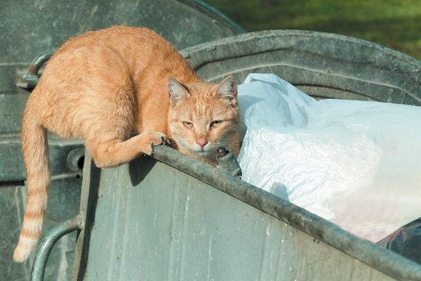 Stopping a feral cat is easier than managing a feral colony. Photography ©Srdjanns74   Getty Images.