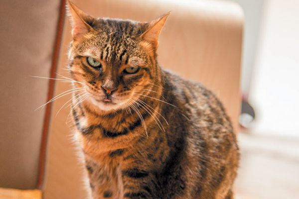 Did you know that Stella the cat is 14 years old? Photography Courtesy Michael Leaverton.