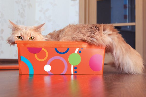 An orange cat in a small colorful box.