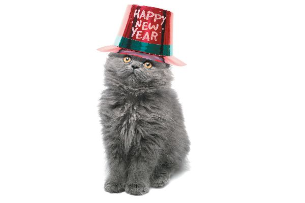 A cat in a New Year's Eve hat.