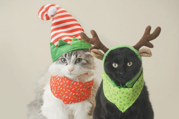 Two cats dressed up in holiday outfits.