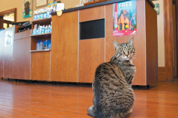 By shopping in-person you get the chance to talk to someone directly about your favorite feline. Photography ©Craig Bullock | Animal Haus Media.
