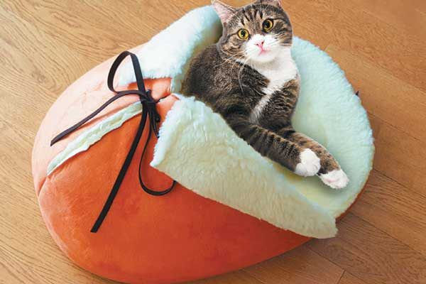 Giant Slipper Pet Bed by Napping JoJo.