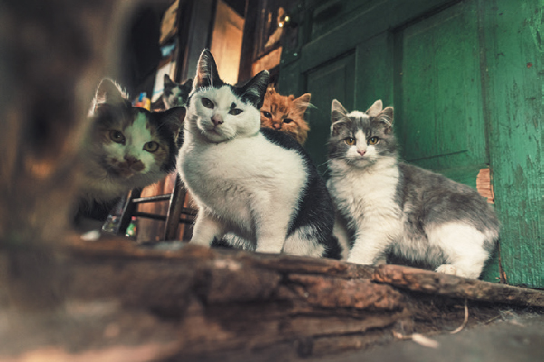 A group of feral cats outside.