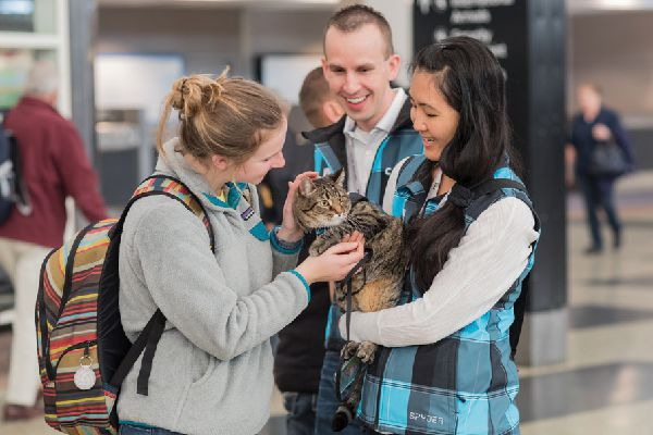Xeli the airport therapy cat.