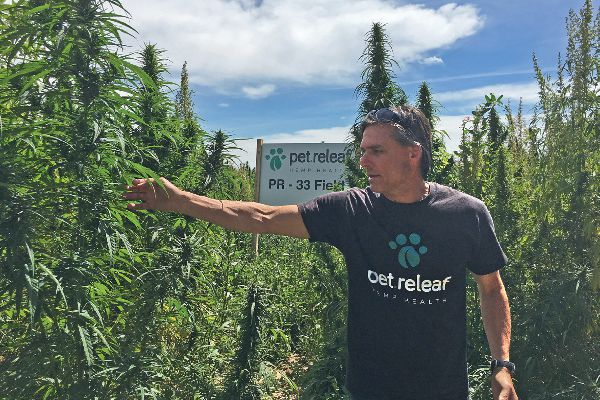 Pet Releaf invited Catster editors to Colorado, where co-founder Steve Smith showed us Pet Releaf's Certified USDA Organic hemp farm that grows a strain of hemp specifically for pet products.