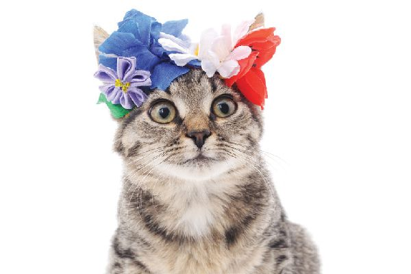 A brown tabby cat using a floral crown.