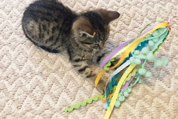 Kitten with DIY cat toy.