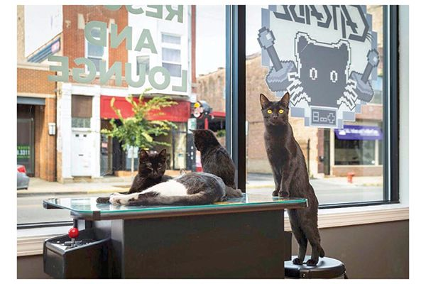 These cats love hanging out by the windows of The Catcade. Photography by: ©Mandy Dempsey Photography