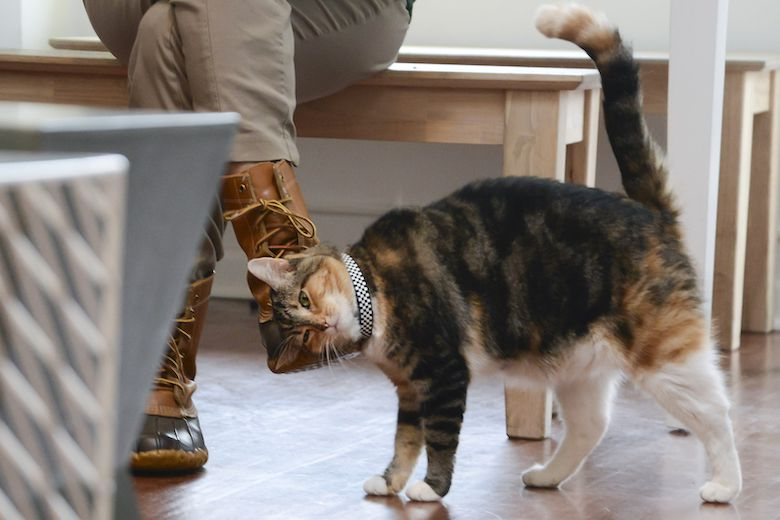 how to support cat cafes