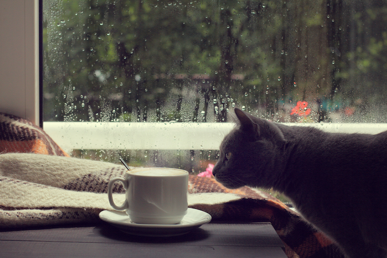 cats and hurricanes