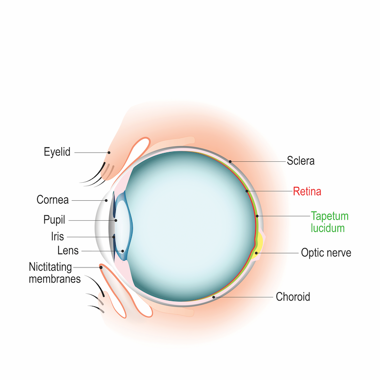 How To Treat Corneal Ulcers