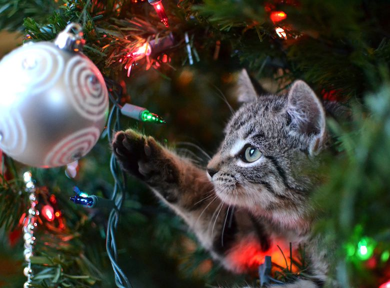 Keep your cat safe around the christmas tree
