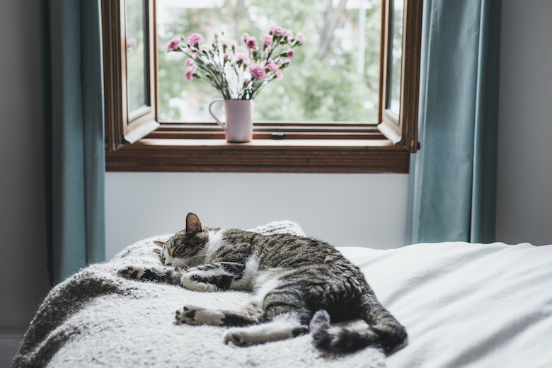 What Flowers are Dangerous to Cats?