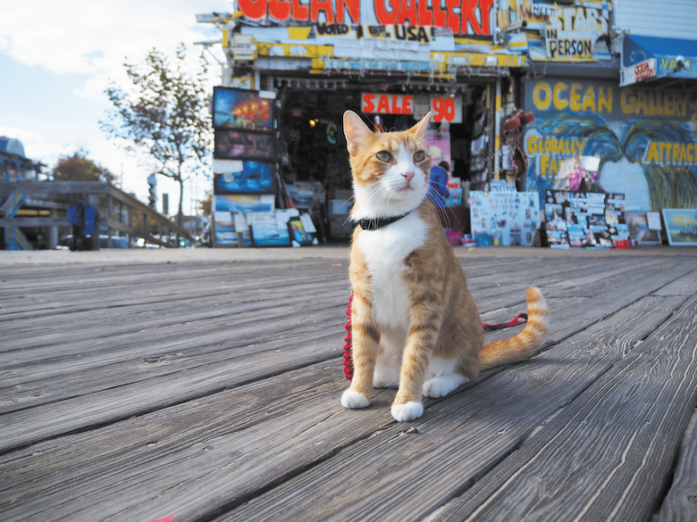 Pip, the beach cat
