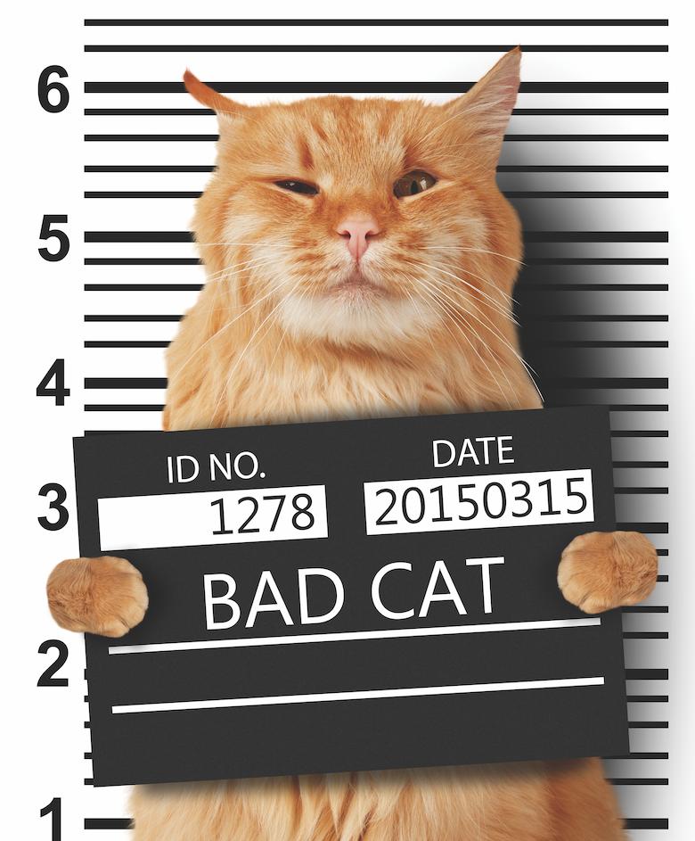 cat needs lawyer