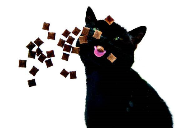 treats floating towards a hungry black cat. get tips on how to feed your cat.