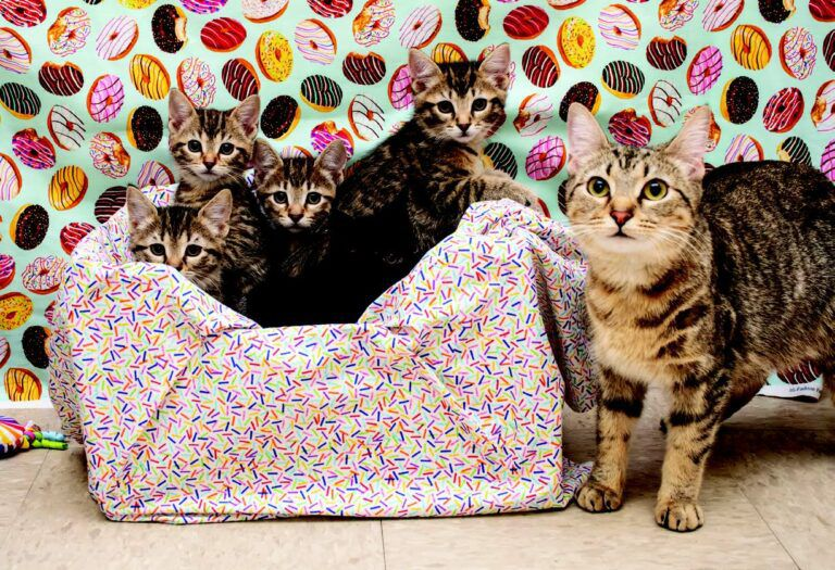 The Bomb Squad Kittens   Catster